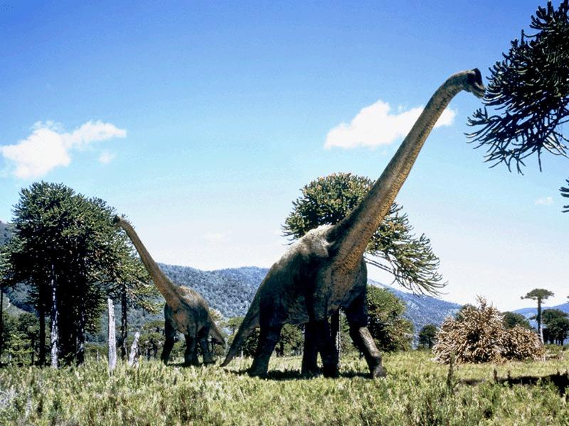 Bellas criaturas [libre] Brachiosaurus
